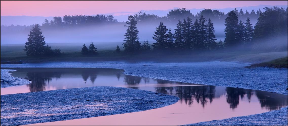 Schoodic peninsula, acadia national park, Maine, fog sunrise, pink, dawn, photo