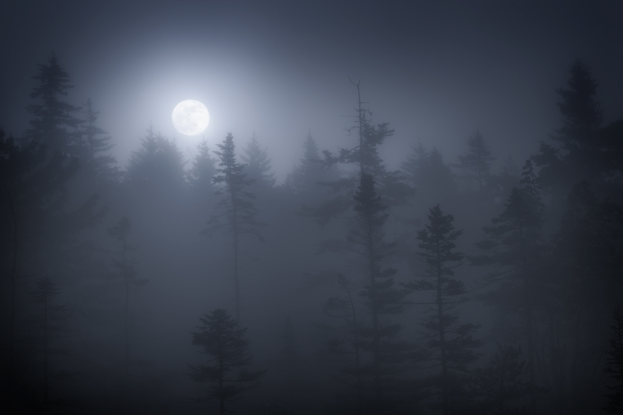 acadia national park, Maine, Schoodic Peninsula, fog, moon, dark, bog,, photo