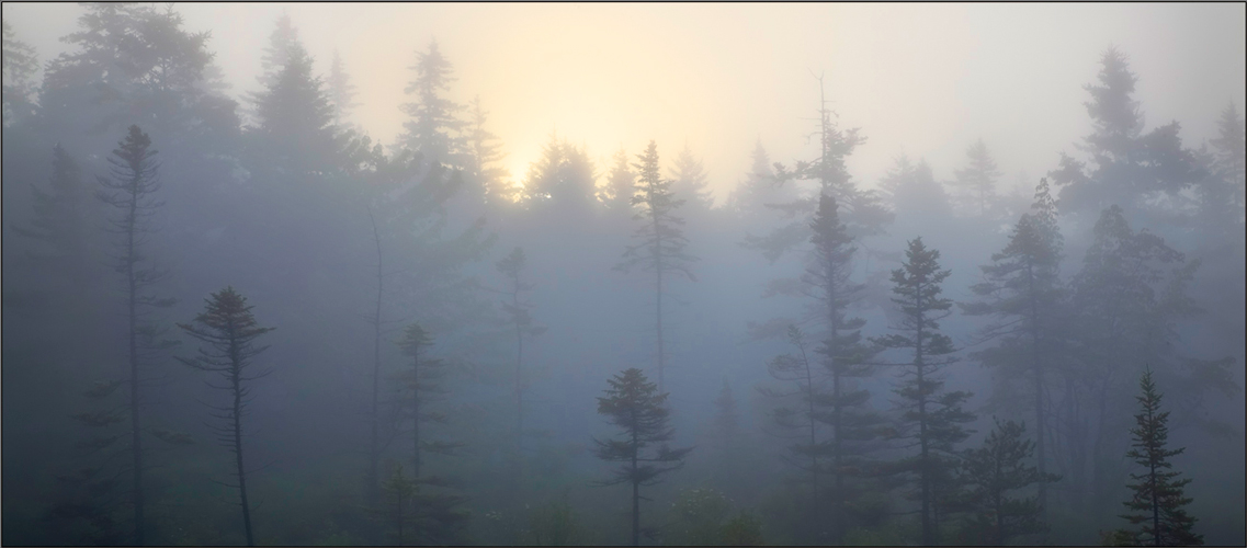 Schoodic peninsula, acadia national park, Maine, fog sunrise