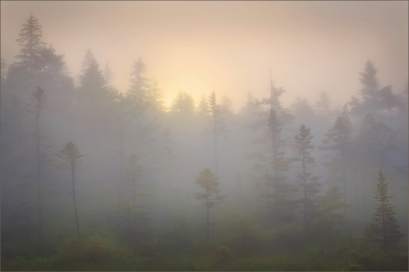 Schoodic peninsula, Maine, fog, forest, photo