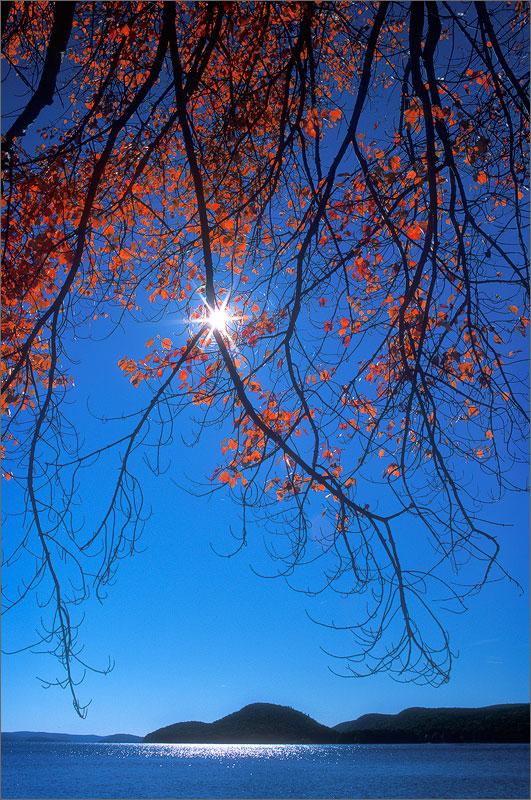 Quabbin reservoir, Massachusetts, autumn, red maple, sun star