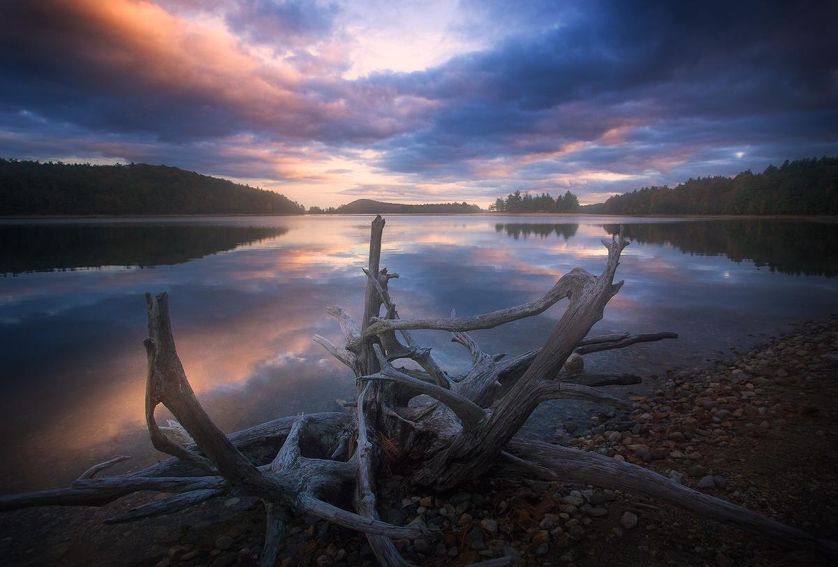 quabbin reservoir, massachusetts, driftwood, lake, sunset, evening, new salem, , photo
