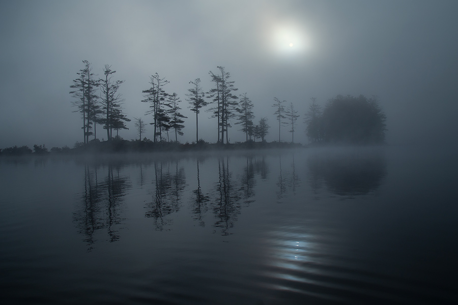 Another magical morning paddling around in the fog.