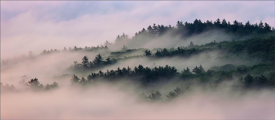 Quabbin reservoir, Massachusetts, fog, sunrise, trees, photo