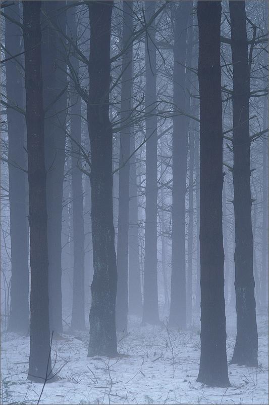 Fog, trees, grey, Massachusetts, Wendell,