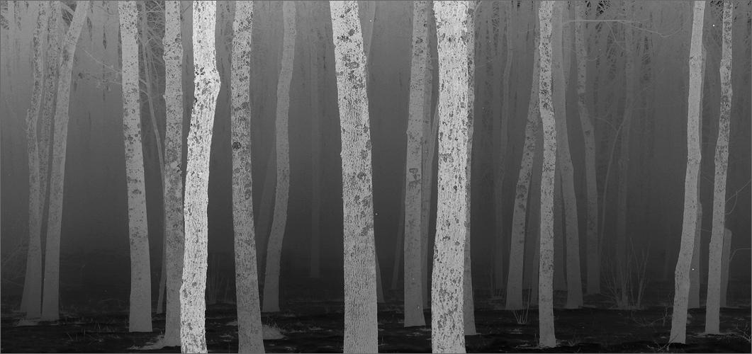 Fog, trees, Amherst, Massachusetts,  grey, photo