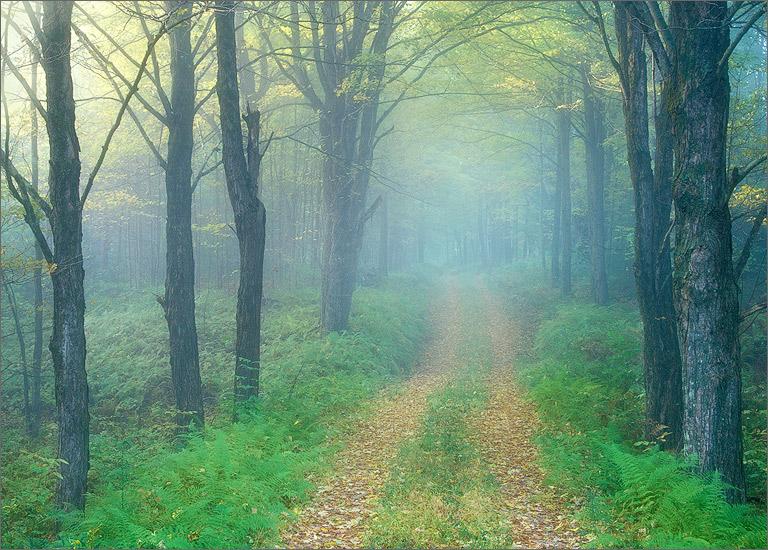 Road, green, quabbin reservoir, Massachusetts, fog