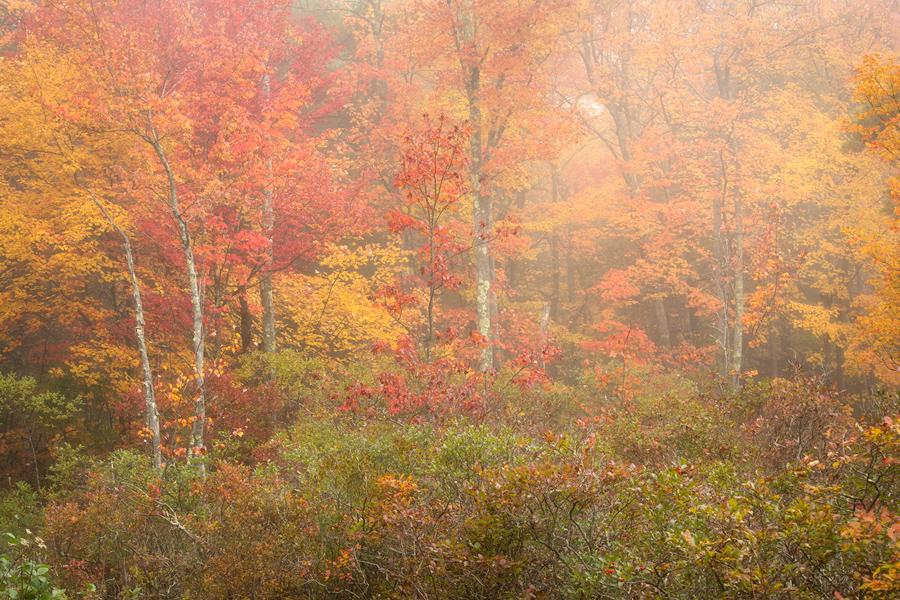 forest, fog, autumn, trees, Quabbin Reservoir, Massachusetts, Patrick Zephyr