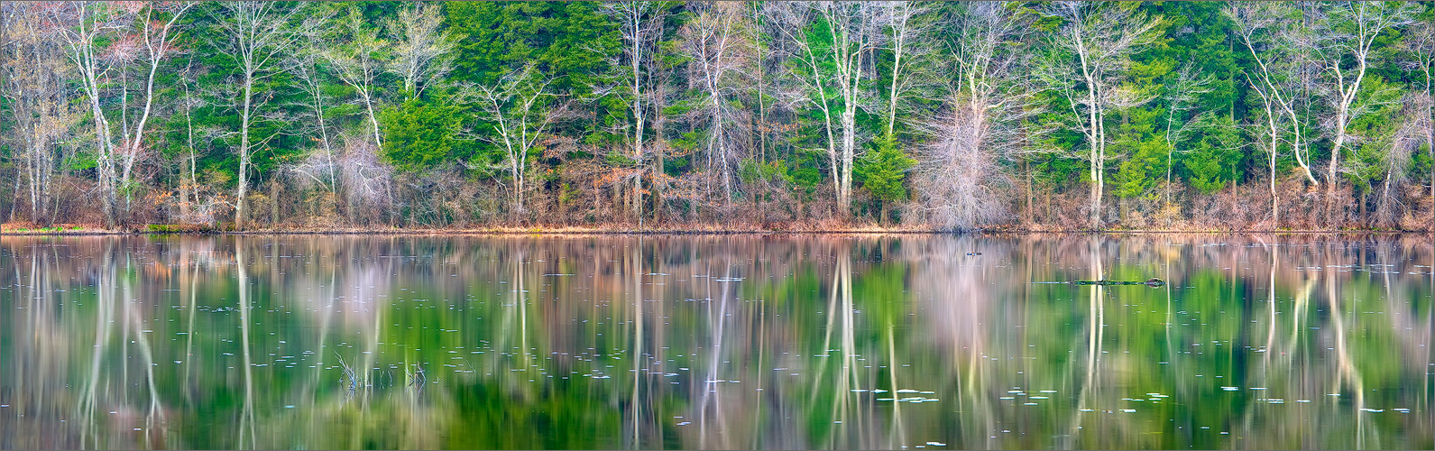 Pond, reflection, spring, Massachusetts,