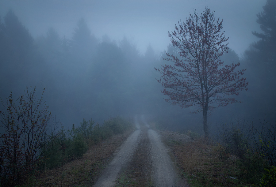 One of my favorite conditions to wander in is fog. On this morning it lasted for hours! I'm always amazed at how even the most...