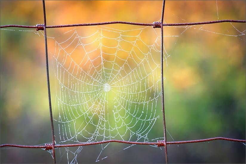 Dew, spider web, autumn