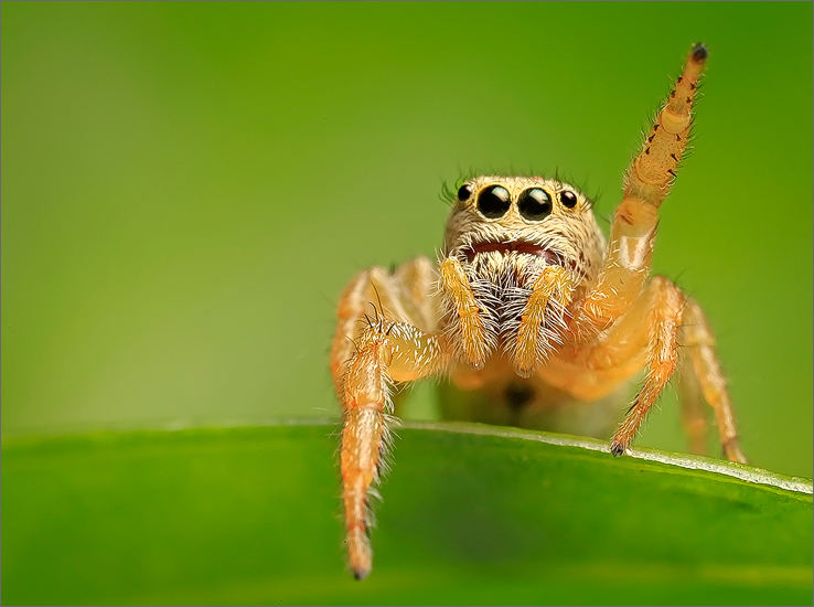 This little jumper (3mm) never stopped waving at me.