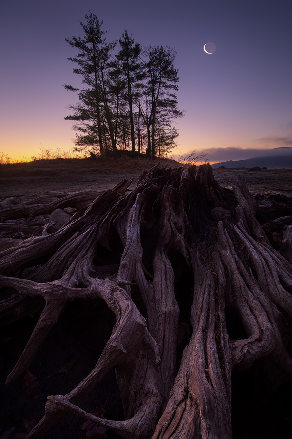 Quabbin Reservoir, Massachusetts, driftwood, Patrick Zephyr, crescent moon. dawn, photo