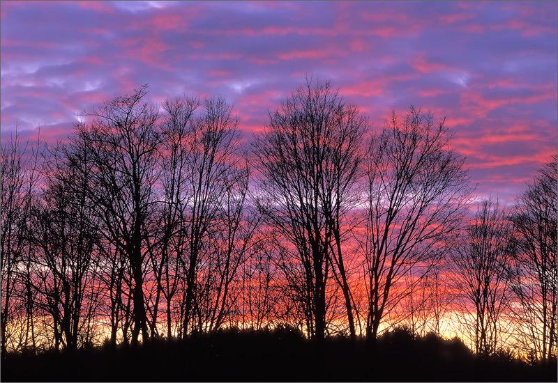 sunset, pink, trees, massachusetts