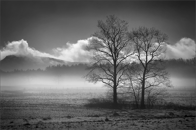 Snow, trees, Hadley, Massachusetts fog, together, photo