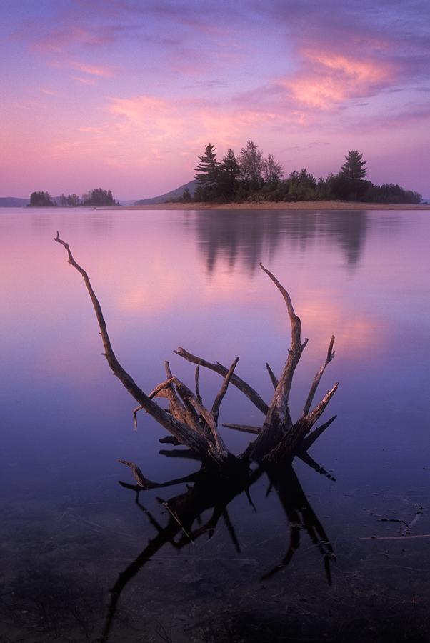Quabbin reservoir, sunrise, island, pink, driftwood