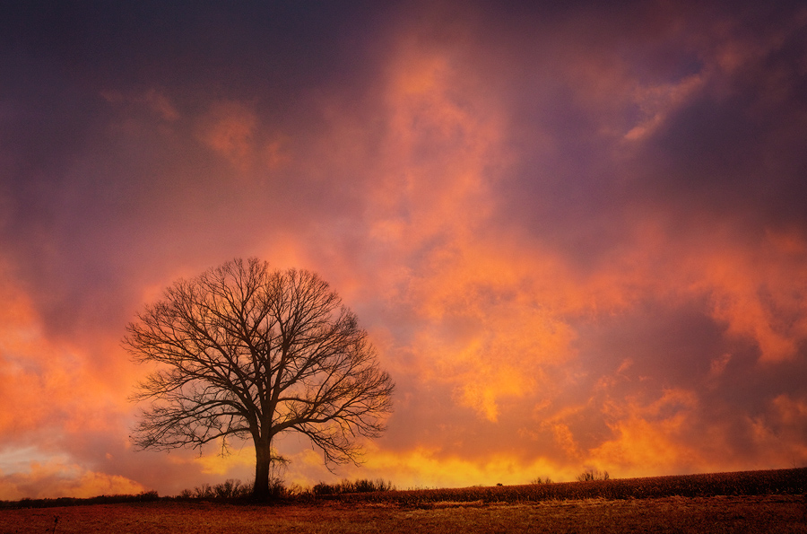 There's a tree that I know and I try to visit it when the Sky is on fire-then again I try to visit it even when the sky isn't...