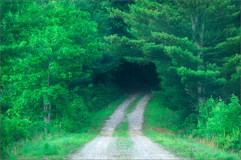 Road, green, quabbin reservoir, Massachusetts, , photo