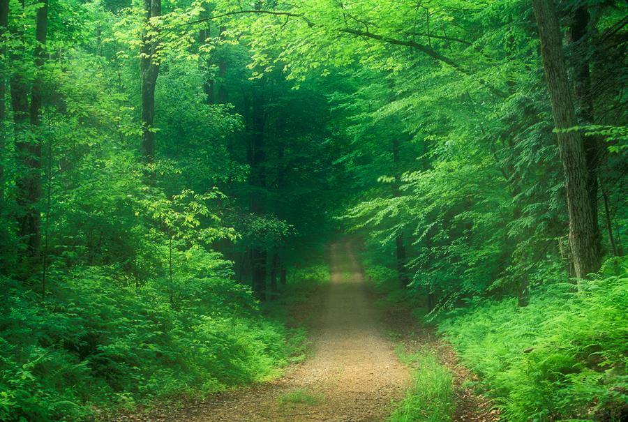 Road, green, quabbin reservoir, Massachusetts,