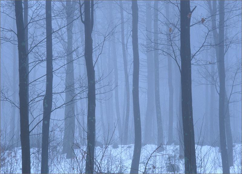 Fog, forest, winter, Wendell, massach, photo
