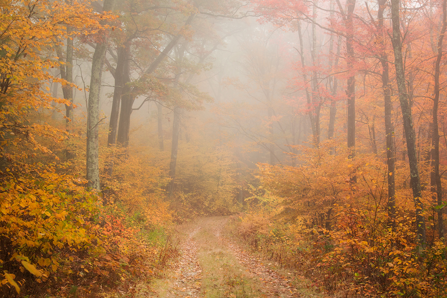 As I set up my camera for a capture of the beautiful autumn colors on a forest trail in the Quabbin a warm breeze brought with...